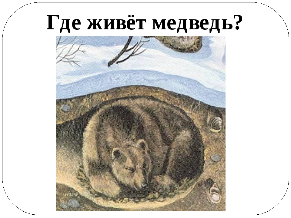 картинка где живет медведь названиями популярных
