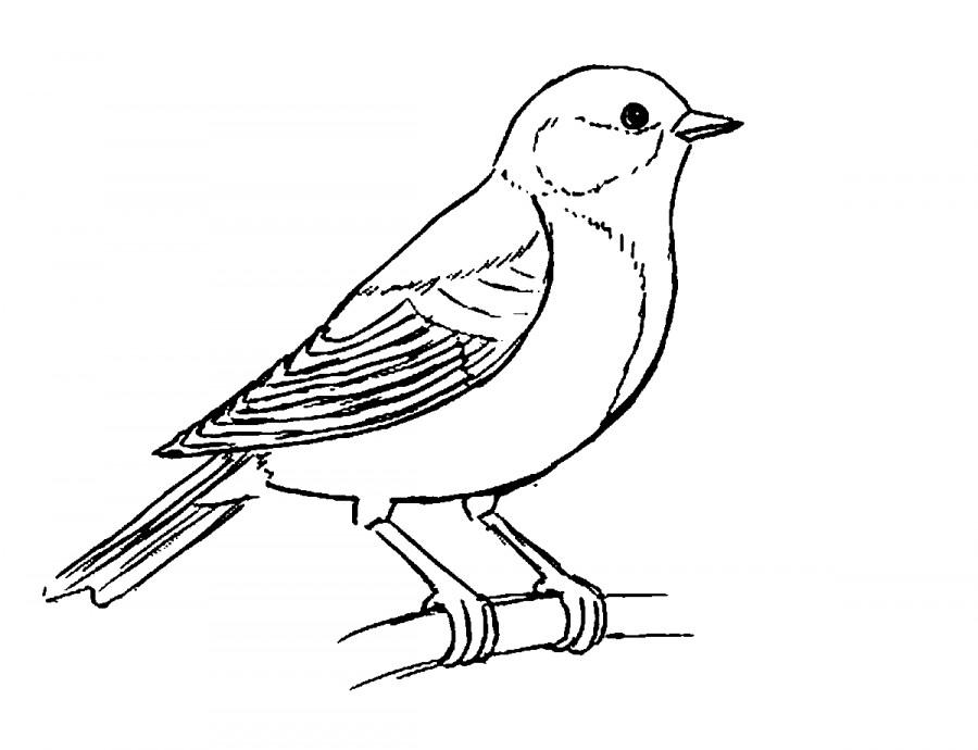 распечатать раскраски зимующие птицы утеплить