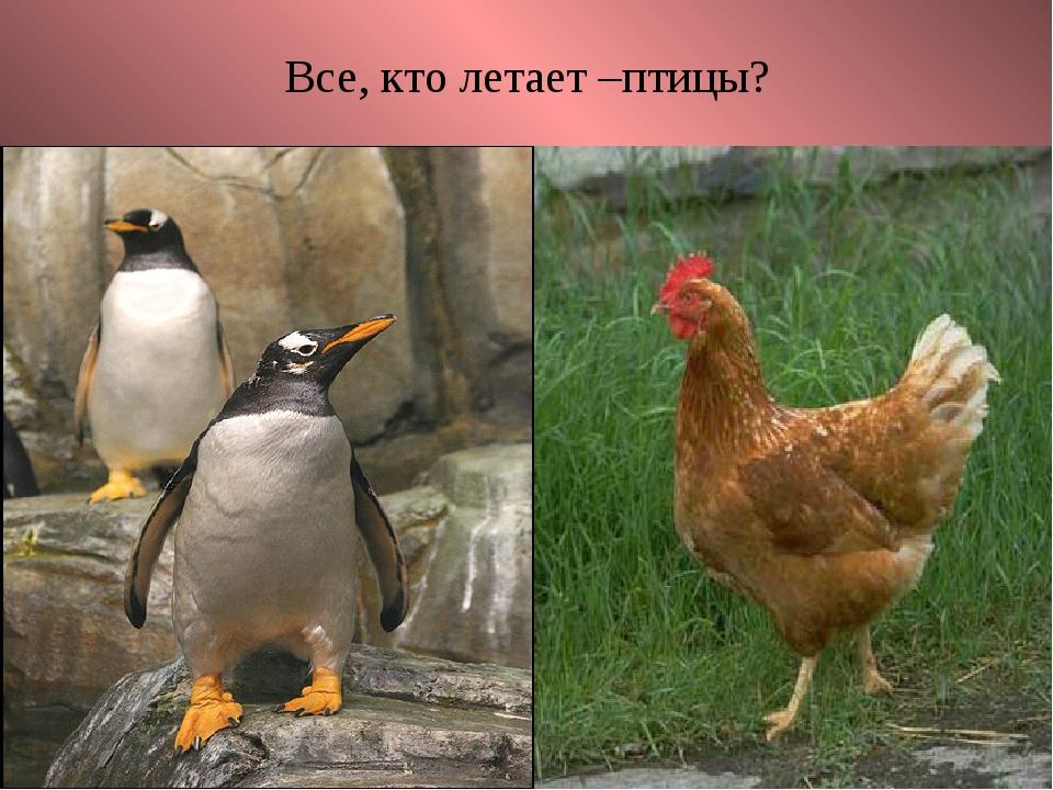 Все, кто летает –птицы?