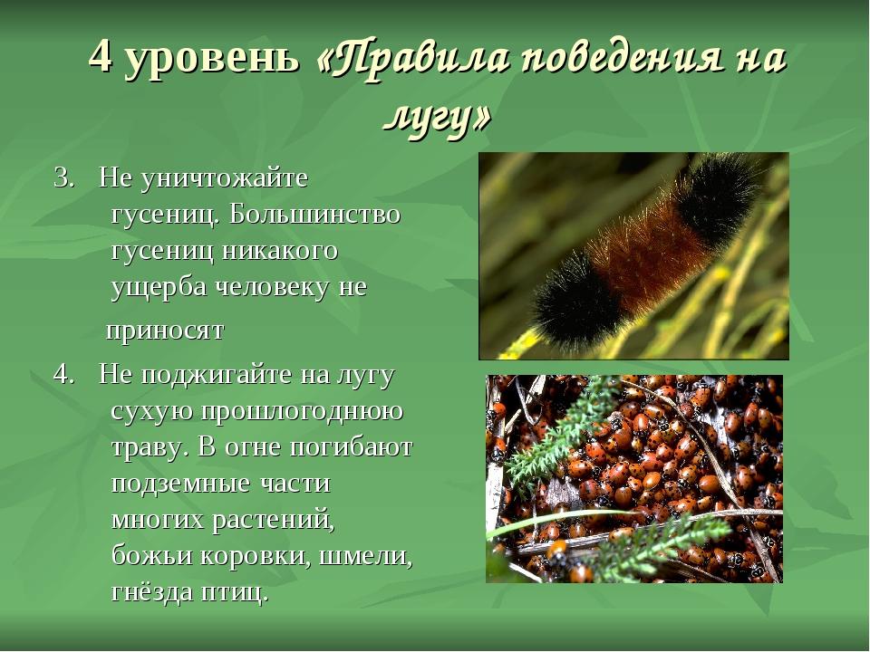 4 уровень «Правила поведения на лугу» 3. Не уничтожайте гусениц. Большинство...