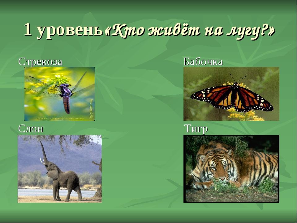 1 уровень«Кто живёт на лугу?» Стрекоза Бабочка Слон Тигр