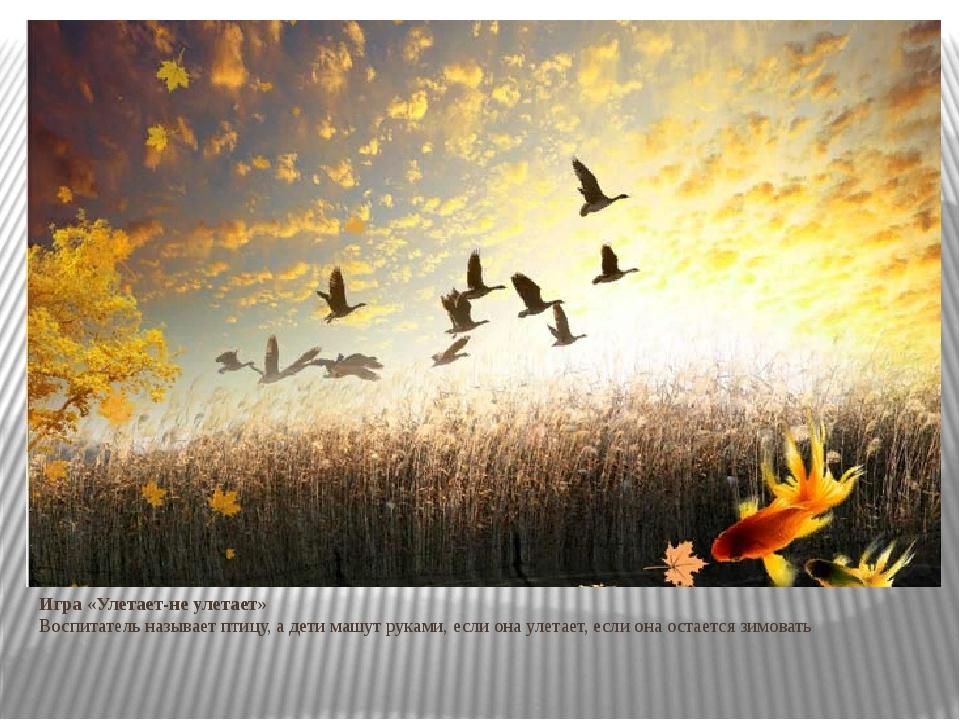 Юбилеем, картинки анимация птицы улетают