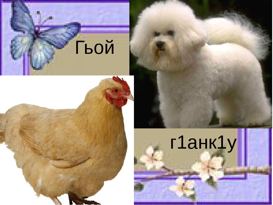 Гьой г1анк1у
