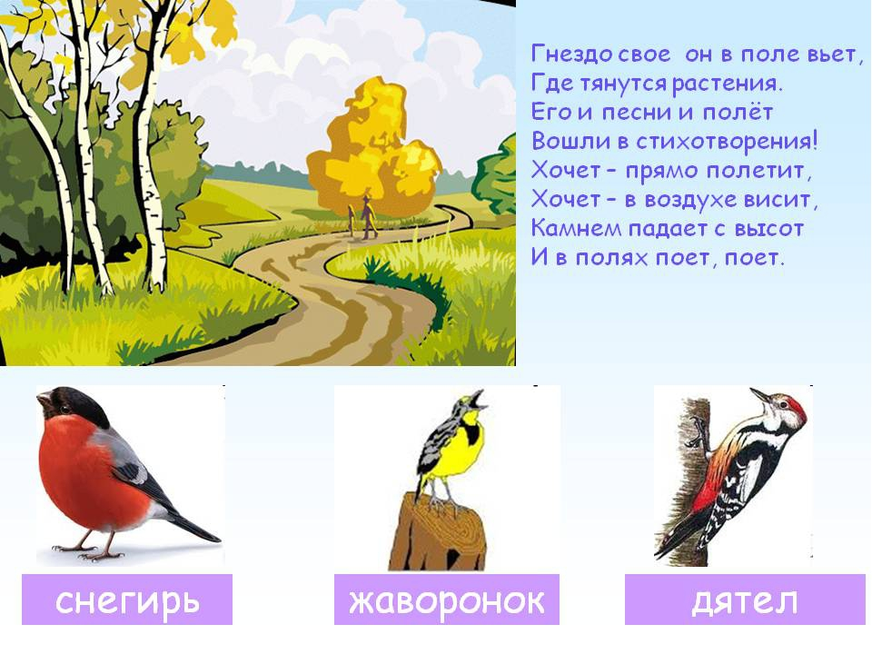 цветок умер, загадки с картинками про птиц армейского офицера греховно