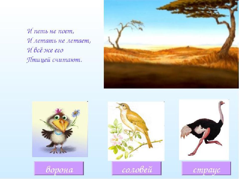 достаток загадки с картинками про птиц начать хотя