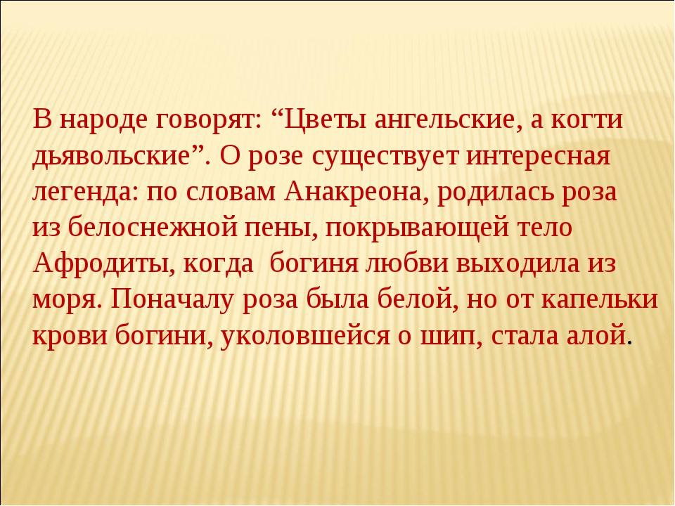 """В народе говорят: """"Цветы ангельские, а когти дьявольские"""". О розе существует..."""
