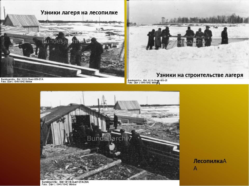 Узники лагеря на лесопилке Узники на строительстве лагеря  Лесопилка