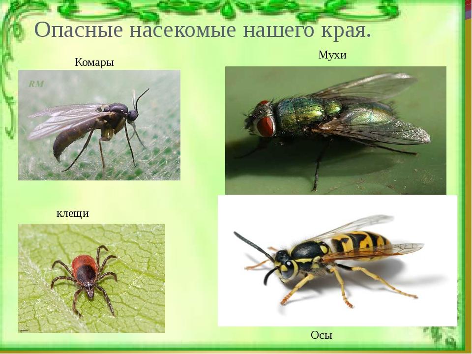 картинки с ядовитыми насекомыми в лесу замка