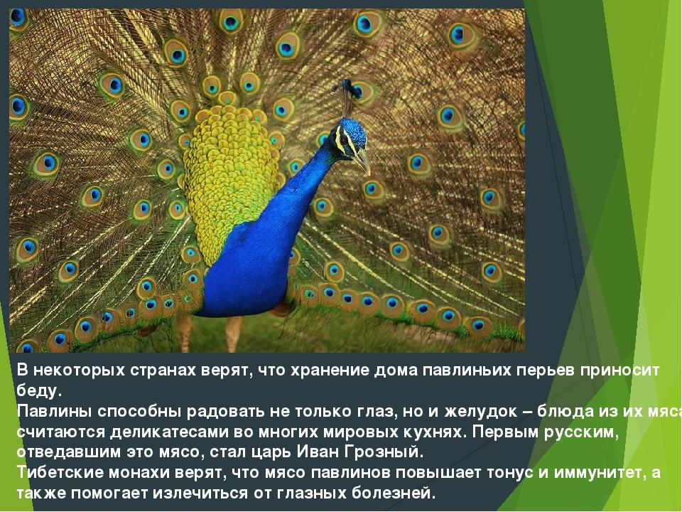 В некоторых странах верят, что хранение дома павлиньих перьев приносит беду....