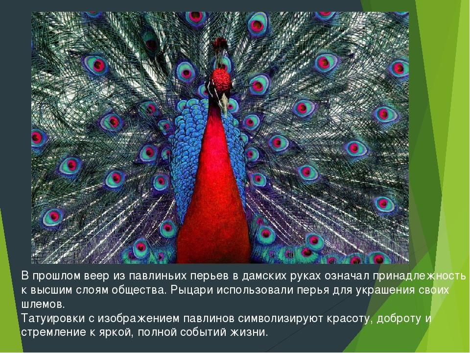В прошлом веер из павлиньих перьев в дамских руках означал принадлежность к в...