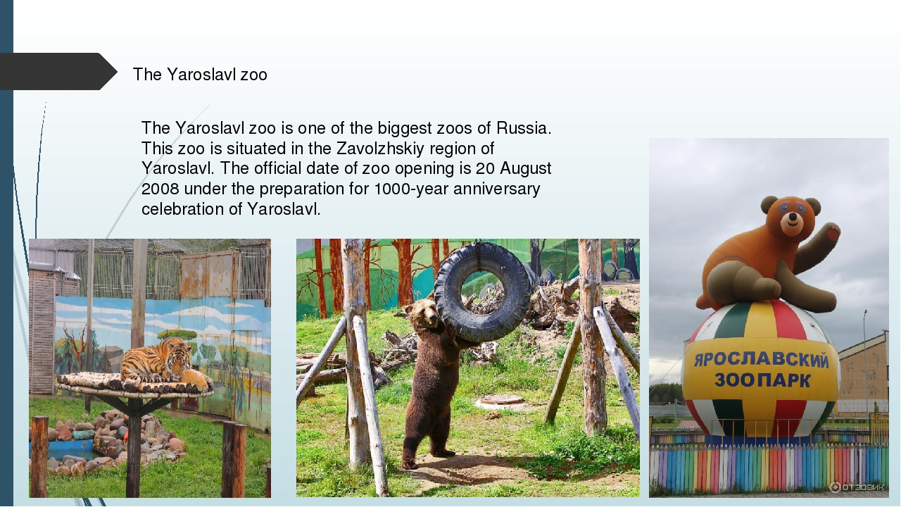 The Yaroslavl zoo The Yaroslavl zoo is one of the biggest zoos of Russia. Thi...
