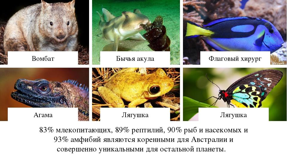 83% млекопитающих, 89% рептилий, 90% рыб и насекомых и 93% амфибий являются к...