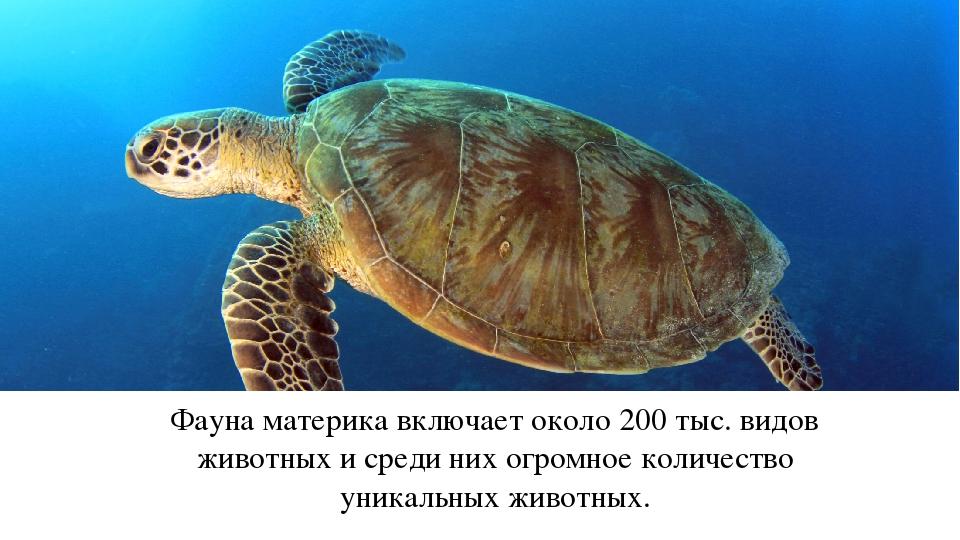 Фауна материка включает около 200 тыс. видов животных и среди них огромное ко...
