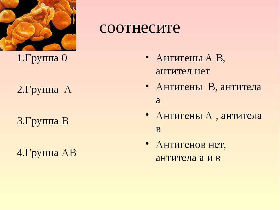 соотнесите 1.Группа 0 2.Группа А 3.Группа В 4.Группа АВ Антигены А В, антител...