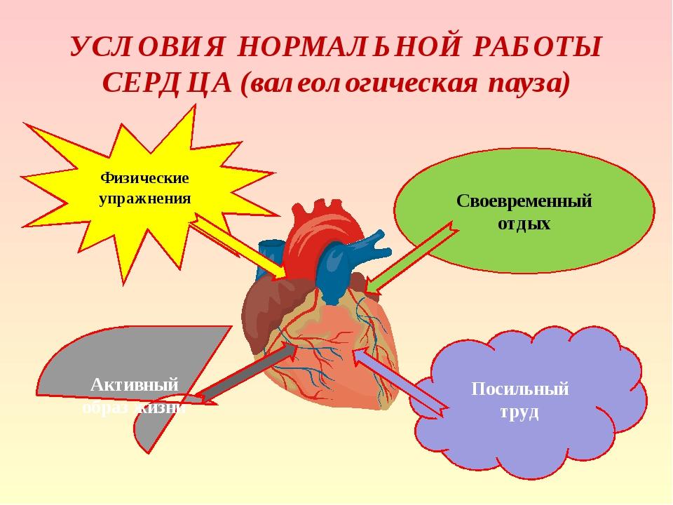 УСЛОВИЯ НОРМАЛЬНОЙ РАБОТЫ СЕРДЦА (валеологическая пауза) Физические упражнени...