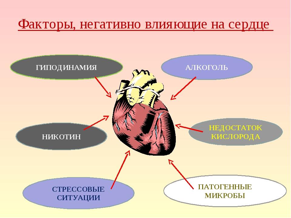 Факторы, негативно влияющие на сердце ГИПОДИНАМИЯ НИКОТИН СТРЕССОВЫЕ СИТУАЦИИ...