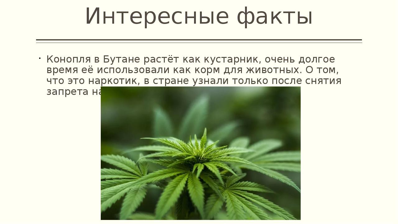 Рассказ о марихуане алкоголь или конопля что лучше