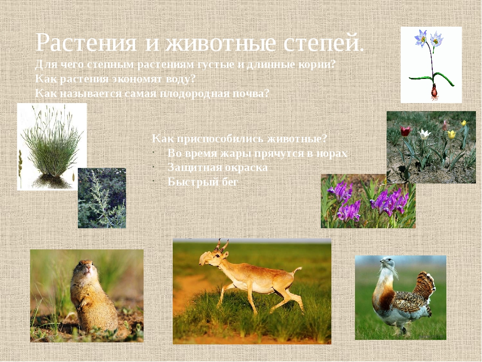 ученики растения и животные степи с картинками или позолота