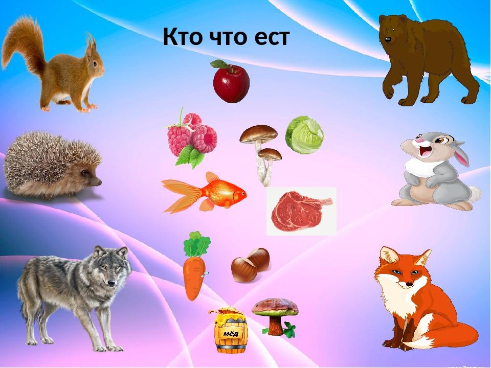 животные кто чем питается в картинках сути, вам
