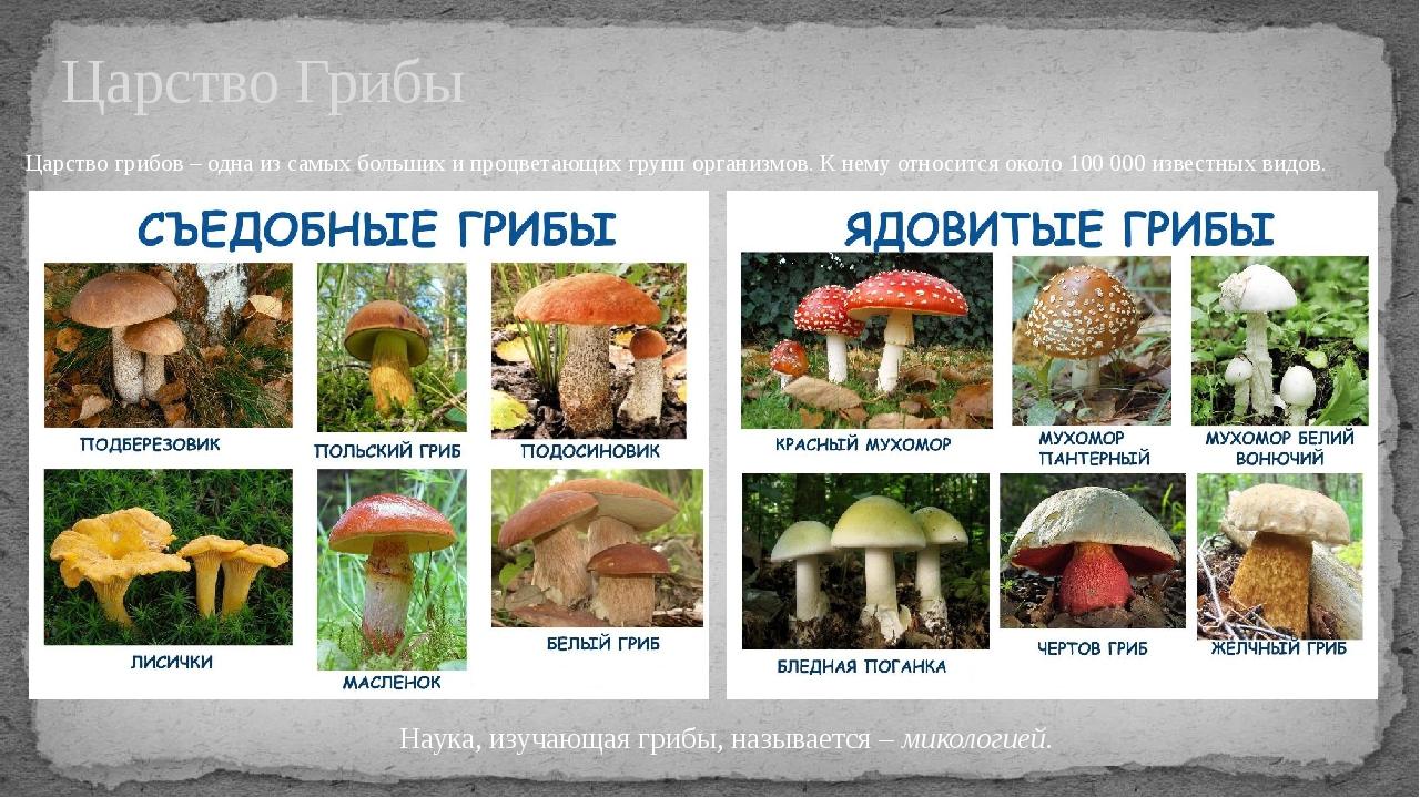 Царство грибов название и картинка