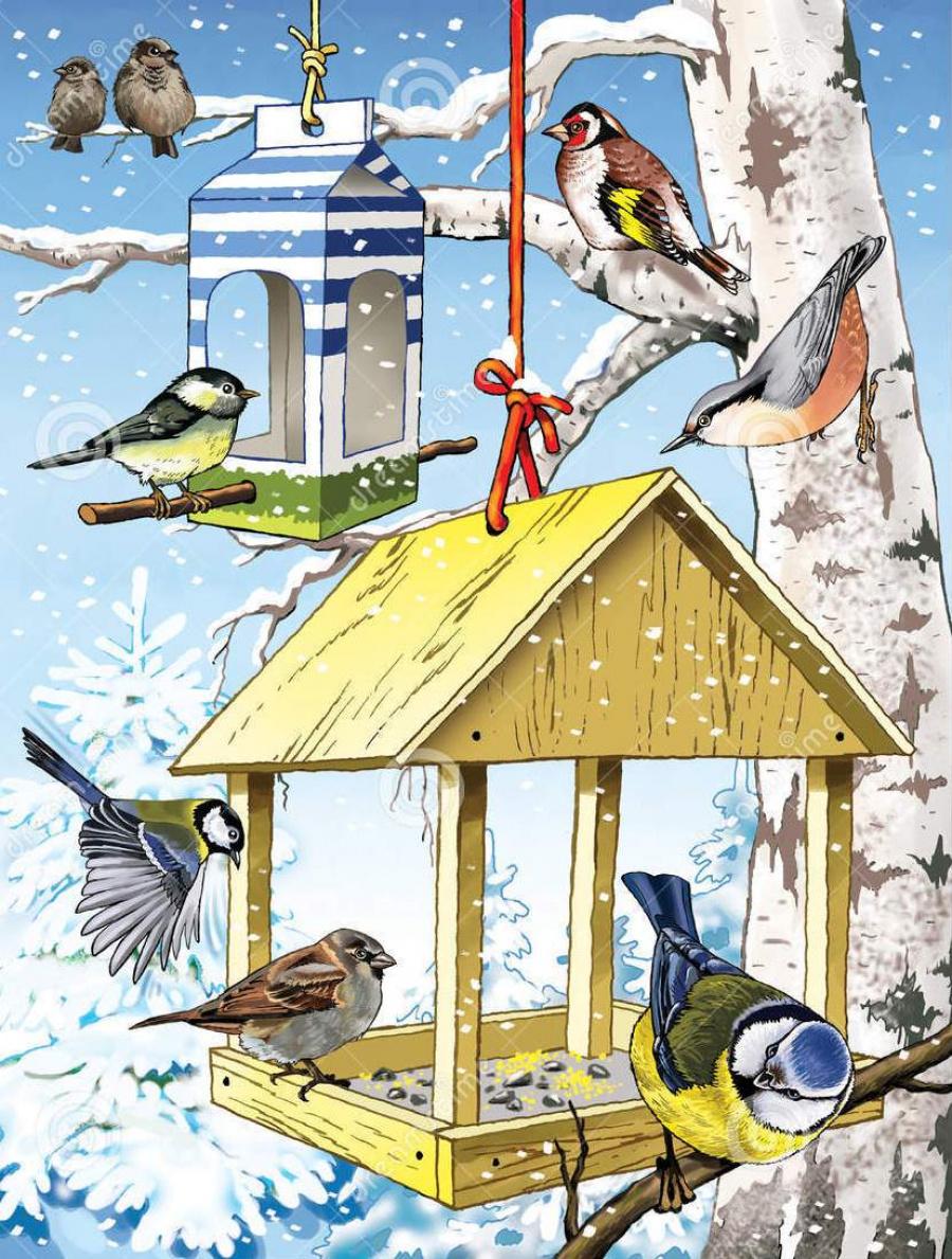 Картинка зимующие птицы на кормушке для детей на прозрачном фоне