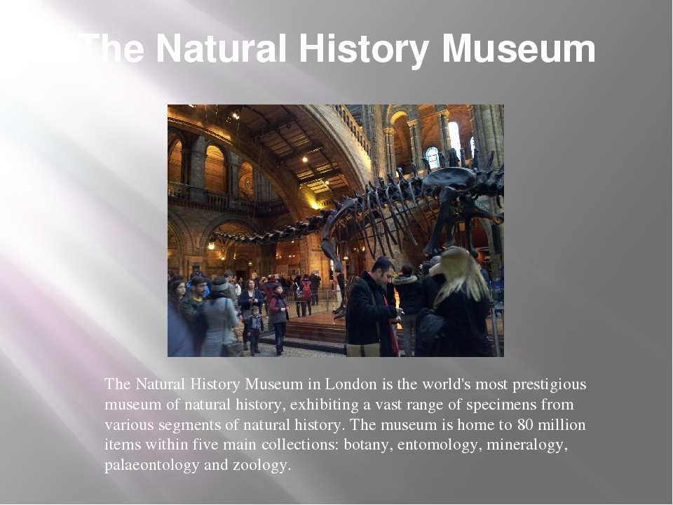 The Natural History Museum The Natural History Museum in London is the world'...