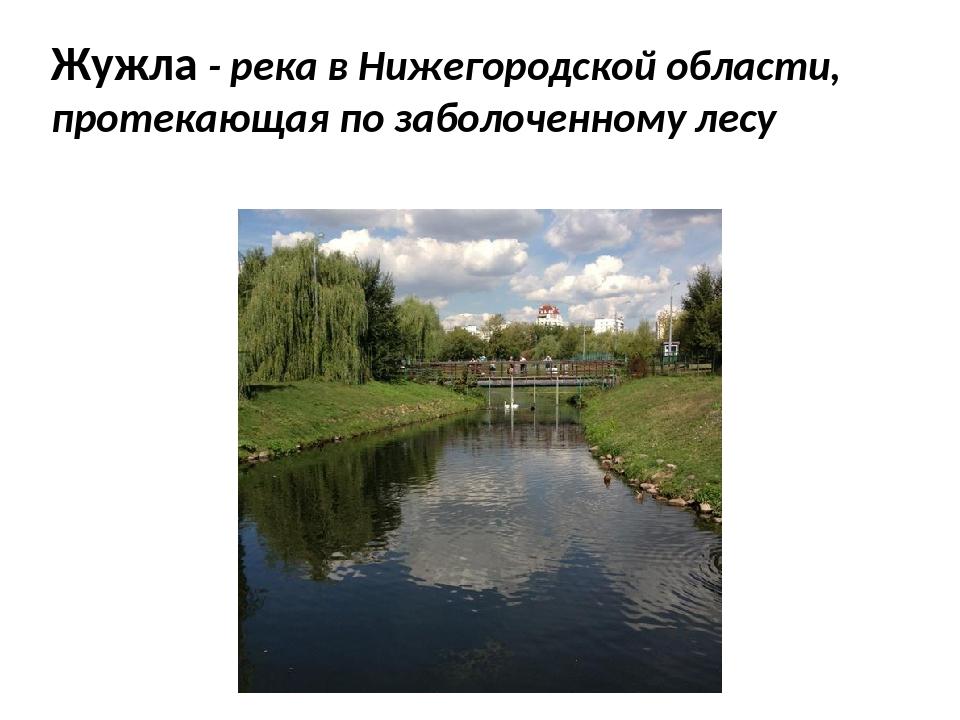 Жужла - река в Нижегородской области, протекающая по заболоченному лесу