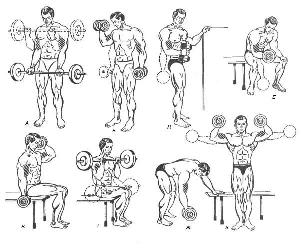 важно чтобы упражнения с гантелями дома в картинках просты исполнении, требуют