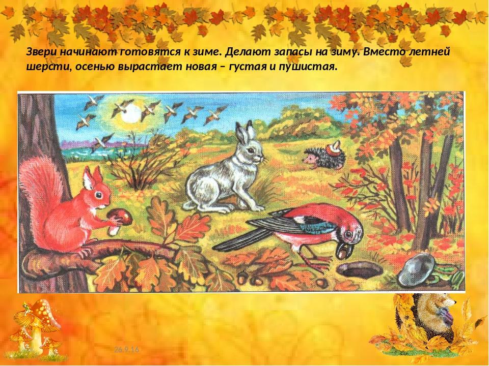 нашли осень картинки животные готовятся к зиме современные