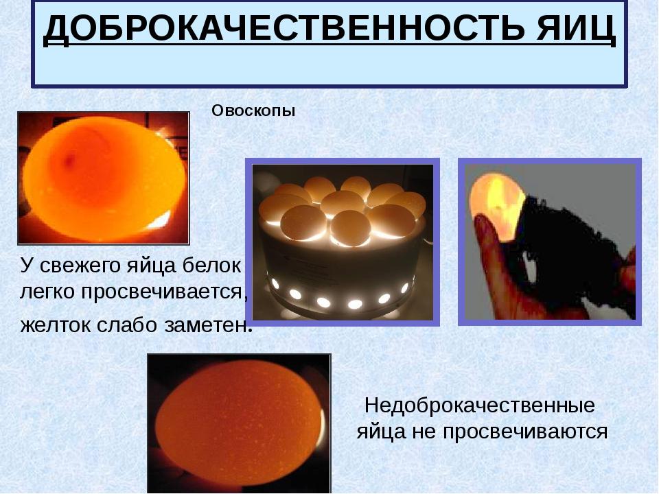 Овоскопы ДОБРОКАЧЕСТВЕННОСТЬ ЯИЦ У свежего яйца белок легко просвечивается,...