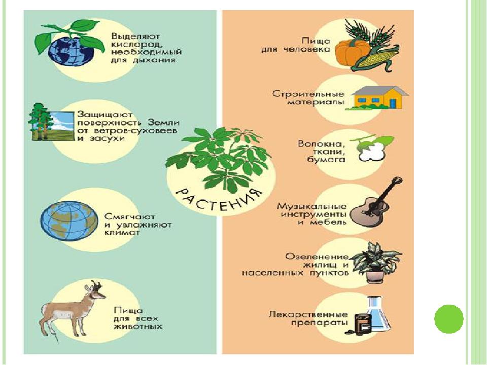 Роль растений в жизни животных картинки