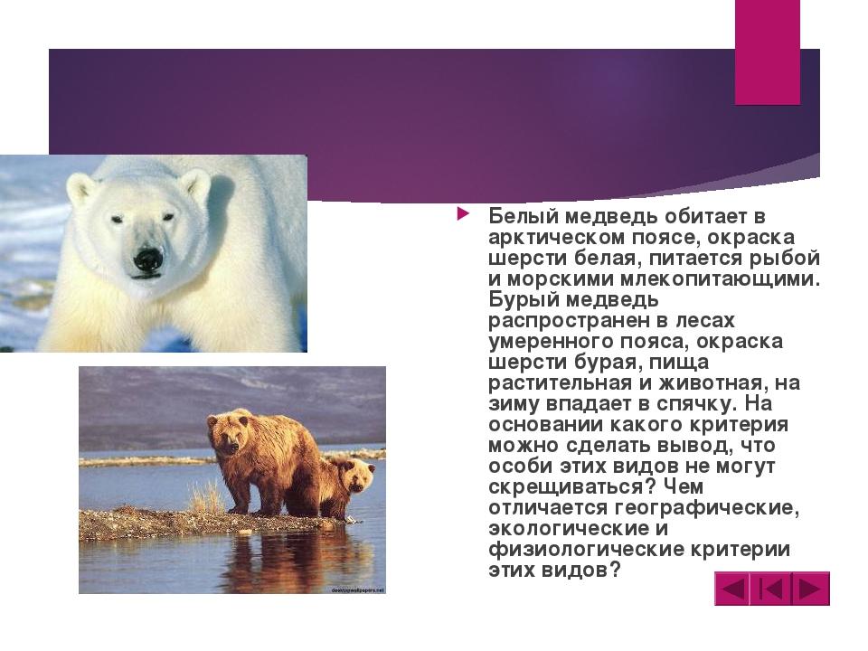 Белый медведь обитает в арктическом поясе, окраска шерсти белая, питается рыб...