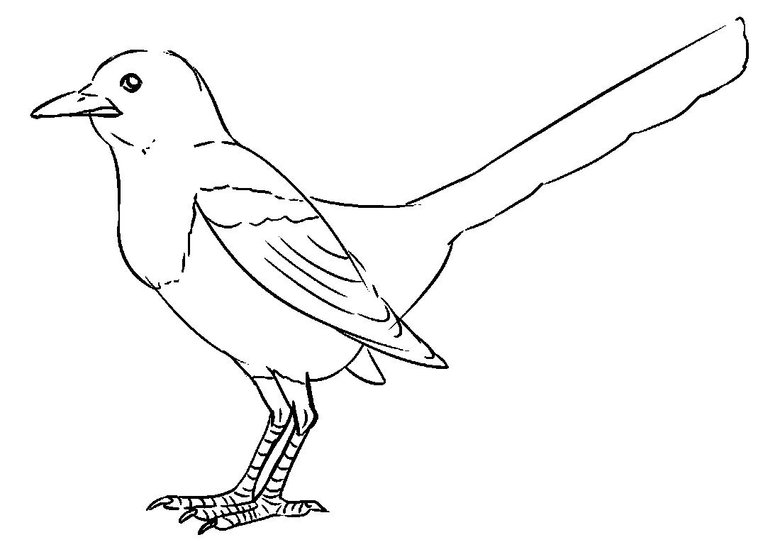 Рисунок птицы карандашом для детей, окулисту для детей