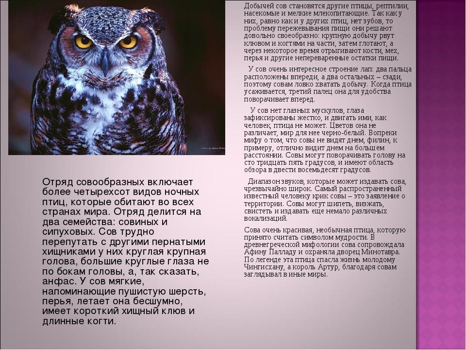 Добычей сов становятся другие птицы, рептилии, насекомые и мелкие млекопитаю...