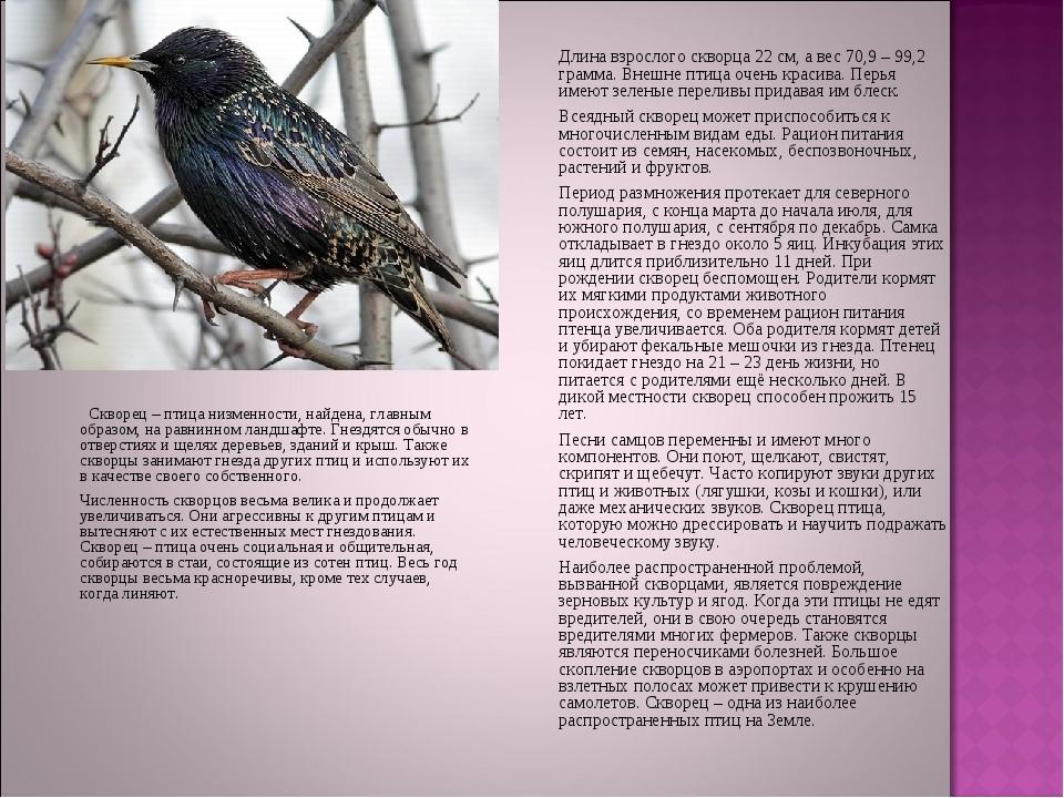 Скворец – птица низменности, найдена, главным образом, на равнинном лан...