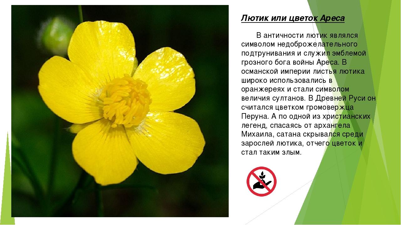 Цветы без листочков