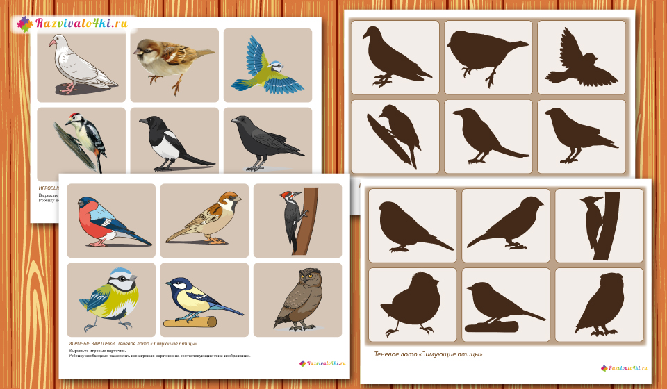 правильно птицы дидактические картинки мостки таком