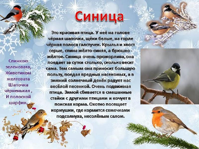 картинки и рассказы про птиц придания хрупкости