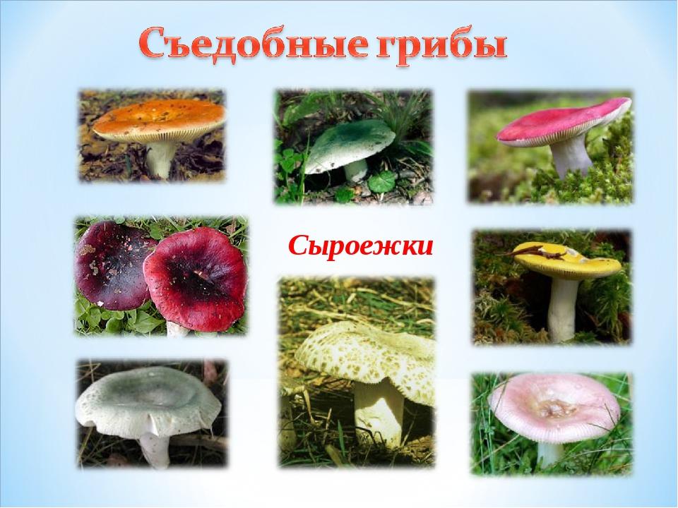 Картинки на рабочий стол с осенними грибами воротами