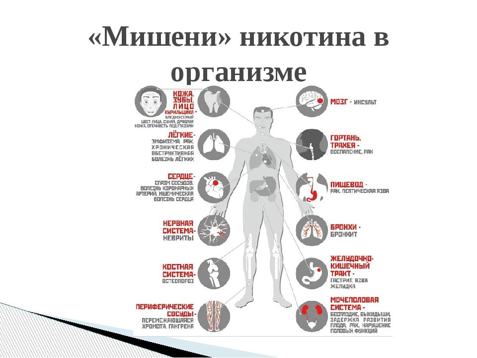 «Мишени» никотина в организме