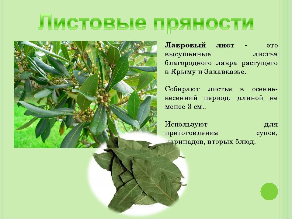 Лавровый лист - это высушенные листья благородного лавра растущего в Крыму и...