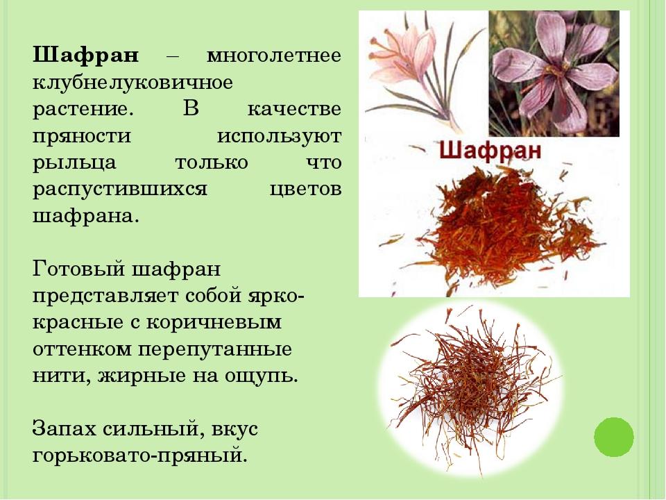 Шафран – многолетнее клубнелуковичное растение. В качестве пряности использую...
