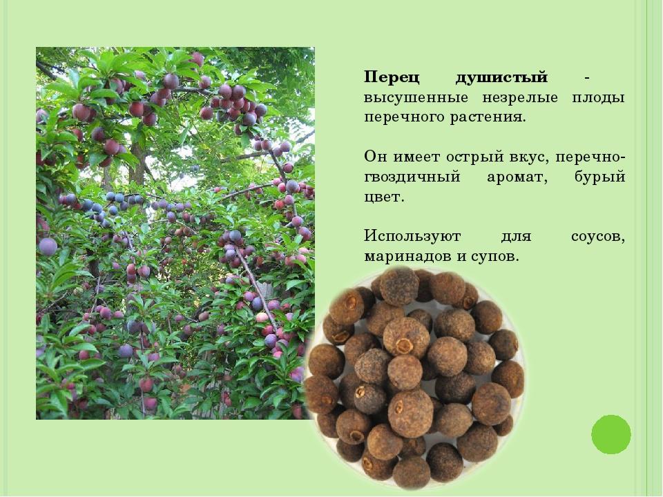 Перец душистый - высушенные незрелые плоды перечного растения. Он имеет остры...