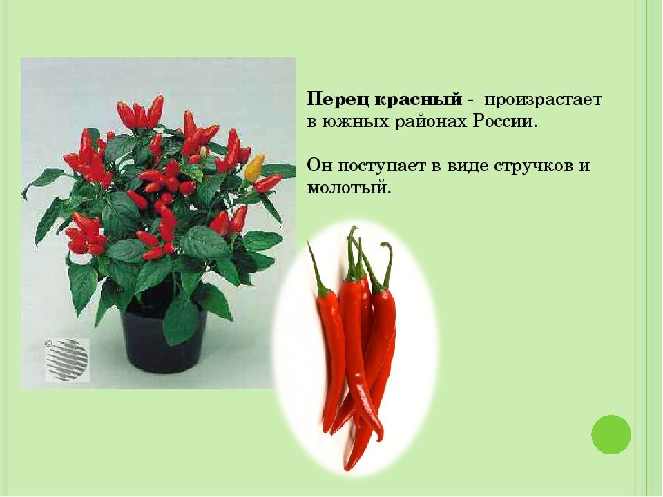 Перец красный - произрастает в южных районах России. Он поступает в виде стру...