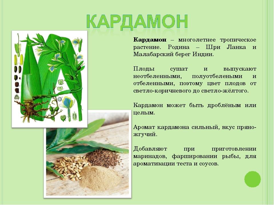 Кардамон – многолетнее тропическое растение. Родина – Шри Ланка и Малабарский...