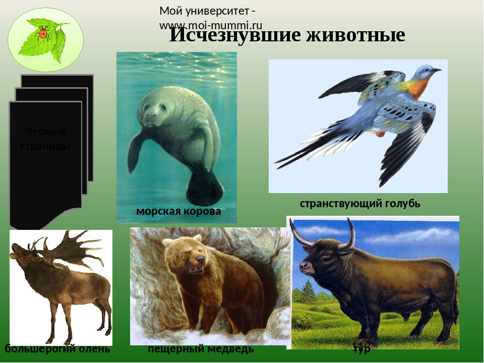 картинка охраняемые животные грушево-шоколадного крамбла