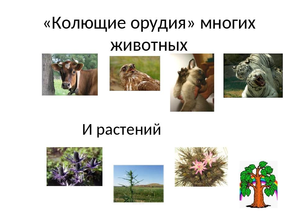 «Колющие орудия» многих животных И растений