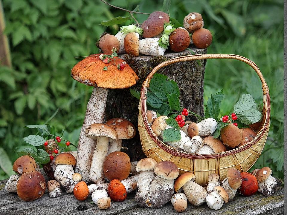 сайте рисунок грибы и ягоды в лесу населения