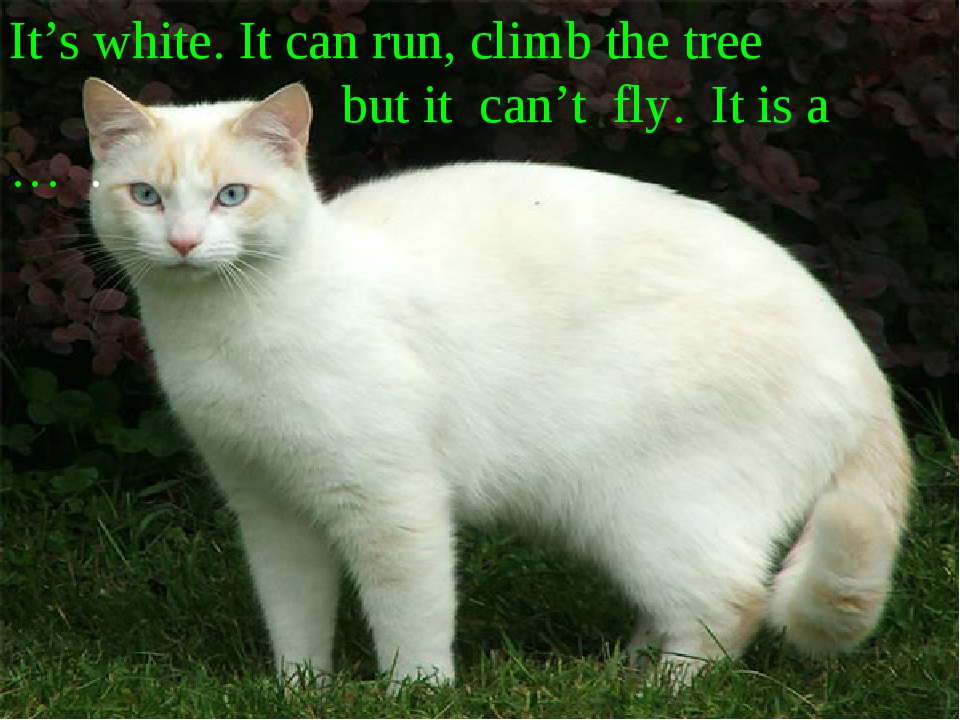 It's white. It can run, climb the tree but it can't fly. It is a … .