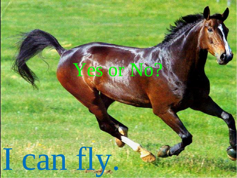 I can fly. Yes or No?